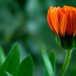 macro-flower-1379794